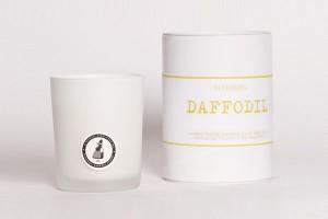 Daffodil_grande